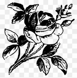 All Photo Png Clipart Ornamen Bunga Mawar Hitam Putih Transparent Png 1083124 Pinclipart
