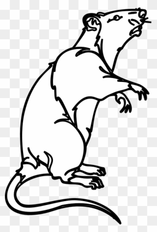 Collection Of White Mouse Cliparts Rat Clip Art Black White Png Download Full Size Clipart 1270164 Pinclipart