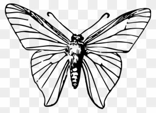 Butterfly Images Gambar Rama Rama Kartun Clipart 479479 Pinclipart