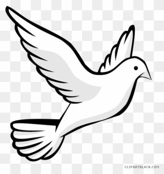 Birds simple. Free png bird clip