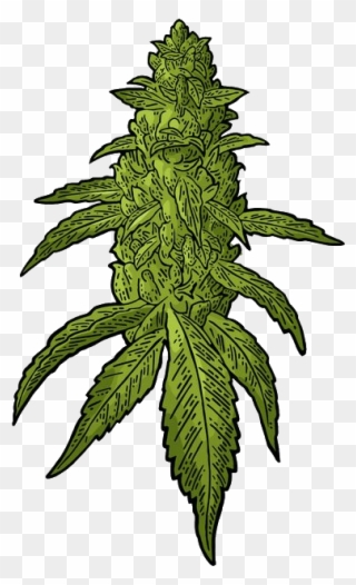 free png weed clip art download page 4 pinclipart free png weed clip art download page