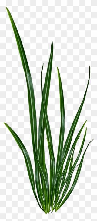 Renders Plante Verte Plante Verte Sans Fond Clipart 2065194 Pinclipart