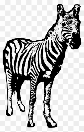 Animal Safari Zebra Zoo Image