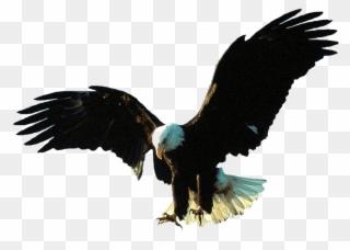 Funny Eagle Cliparts - Cliparts Zone