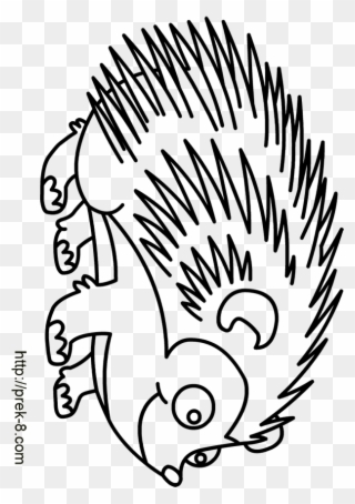 Raccoon Clipart Raccoon Drawing