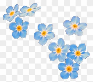 Free Flower Photo Overlays - Flowers Healthy