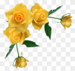 Yellow Roses Clipart Yellow Rose Border Clipart Png Download