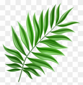 Free PNG Leaf Clip Art Download - PinClipart
