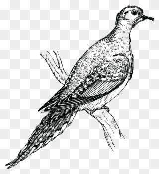 Gambar Kartun Burung Lovebird Clipart 1392735 Pinclipart