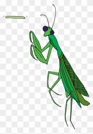 Praying Mantis Clipart Insect Clip Art Praying Mantis Clipart